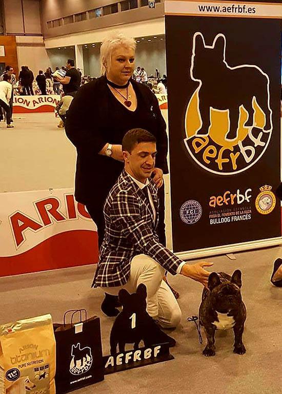tapety bulldog fransk